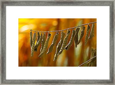Dried Dreams Framed Print