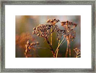 Framed Print featuring the photograph Dried by Erin Kohlenberg