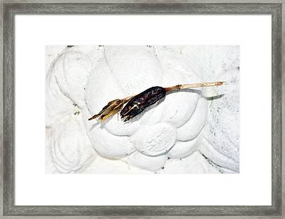 Dried Flower  Framed Print by Tommytechno Sweden
