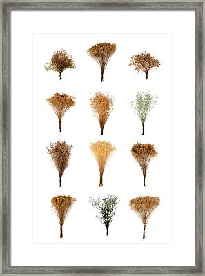 Dried Flowers Collection Framed Print by Olivier Le Queinec