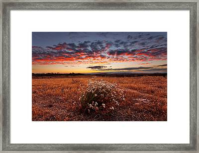 Dried Flowers Framed Print by Peter Tellone