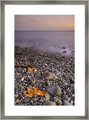 Dried Leaves Of The Sea Framed Print by Guido Montanes Castillo