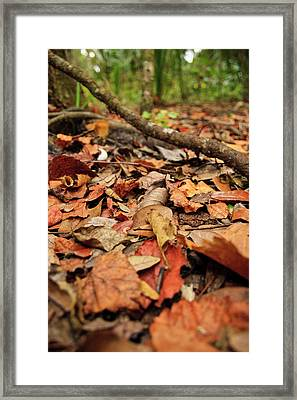 Dried Leaves On The Ground Framed Print by � Marcela Montano - Vwpics