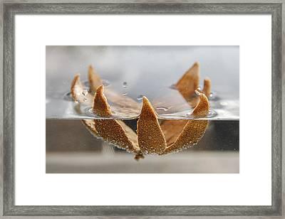 Dried Orange Shell Framed Print by Thomas Olbrich