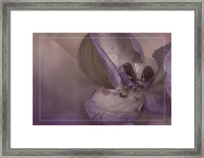 Dried Orchid Framed Print by Cindy Rubin
