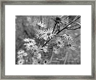 Dried Out Perfection Framed Print