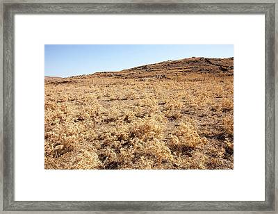 Dried Up Farmland On Lemnos Greece Framed Print