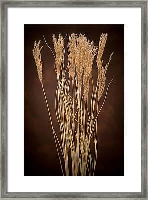 Dried Winter Grasses Framed Print by Steve Gadomski
