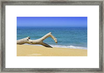 Driftwood Framed Print by Aged Pixel
