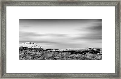 Drift-wood Framed Print