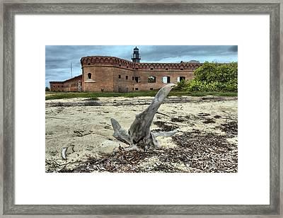 Drift Wood Seal Framed Print by Adam Jewell
