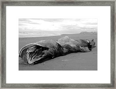 Drifter II Framed Print