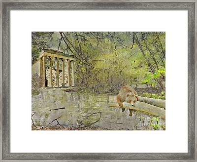 Drifter Framed Print by Liane Wright