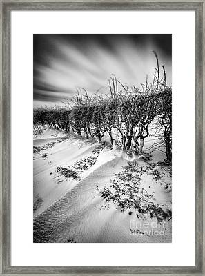 Drifting Framed Print by John Farnan