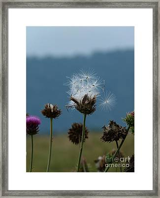 Framed Print featuring the photograph Drifting Off by Jane Ford