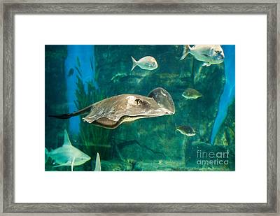 Drifting Through Life Framed Print