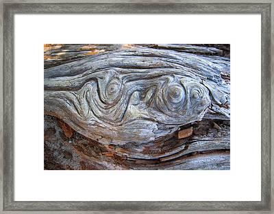 Driftwood 1 Framed Print