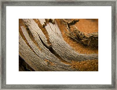 Driftwood 2 Framed Print