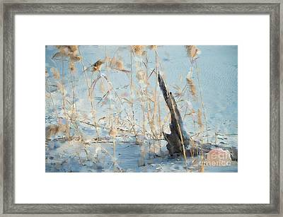 Driftwood Abstract Framed Print by Betty LaRue