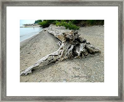 Driftwood At Lake Erie Framed Print by Kathy Barney