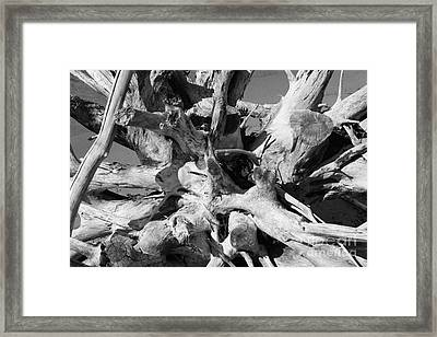 Driftwood Framed Print by Barbara Bardzik