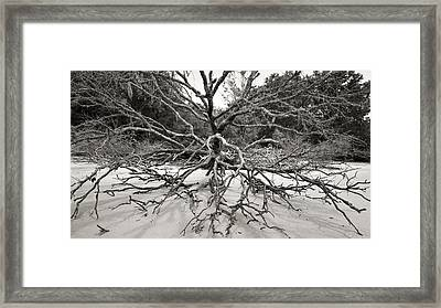 Driftwood Framed Print by Barbara Northrup