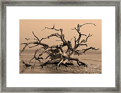 Driftwood Beach Jekyll Island Framed Print by Leslie Kirk