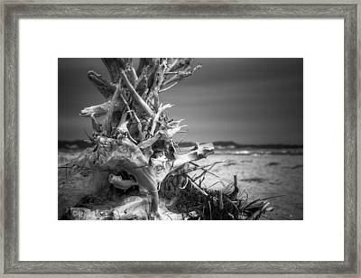 Driftwood At Race Point Framed Print by Brian Caldwell
