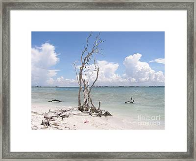 Framed Print featuring the photograph Driftwood by Carol  Bradley
