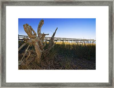 Driftwood Dataw Framed Print