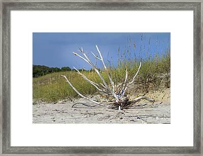 Driftwood Framed Print by Betsy Knapp