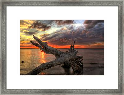 Driftwood Eye Of Fire Framed Print