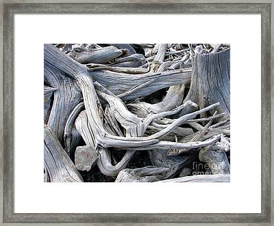 Driftwood Framed Print by Gerry Bates