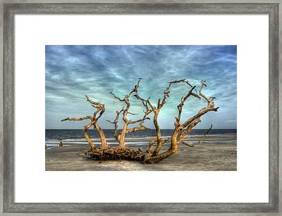 Driftwood Grove Framed Print by Greg and Chrystal Mimbs