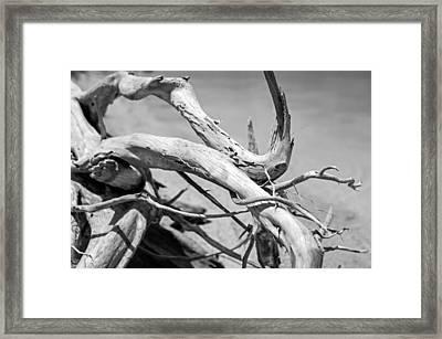 Driftwood Framed Print by Jonathan Gewirtz