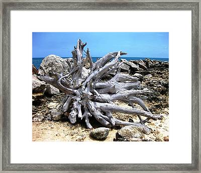 Framed Print featuring the photograph Driftwood by Judy Palkimas