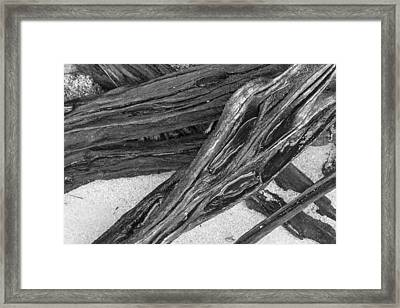 Driftwood On A Beach Framed Print by Tim Grams