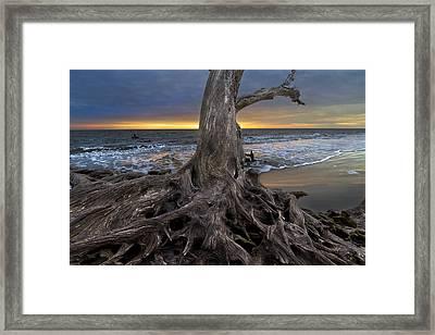 Driftwood On Jekyll Island Framed Print by Debra and Dave Vanderlaan