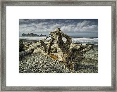 Driftwood On Rialto Beach In Olympic National Park No. 144 Framed Print by Randall Nyhof