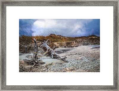 Driftwood On The Dunes Framed Print by Debra and Dave Vanderlaan