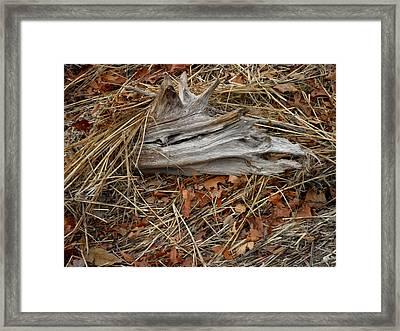 Driftwood On The Shore Framed Print