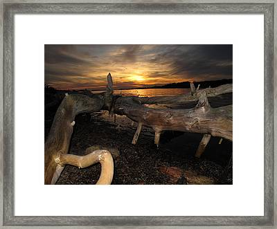 Driftwood Sunset Framed Print by Donnie Freeman