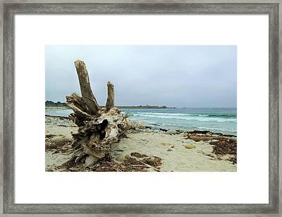 Driftwood Framed Print by Tamyra Crossley