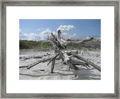 Driftwood Tree Framed Print