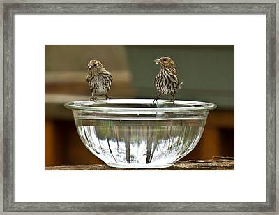 Drink Up Framed Print by Robert L Jackson