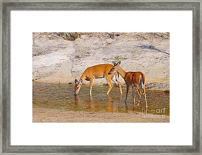 Drinking Does Framed Print by Al Powell Photography USA