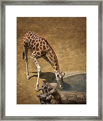 Framed Print featuring the photograph Drinking Time by Kim Andelkovic