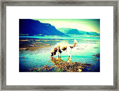 Springer Spaniel Drinking Water From The Big Blue Sea  Framed Print by Hilde Widerberg
