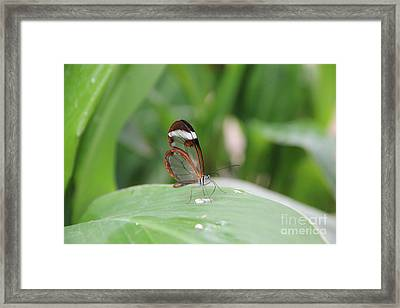 Drinking Water Framed Print by Jackie Mestrom
