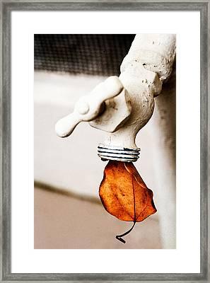 Drip Leaf Framed Print by Bobbi Feasel